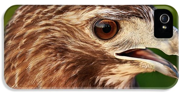 Hawk iPhone 5 Cases - Red Tailed Hawk Portrait iPhone 5 Case by Dan Sproul