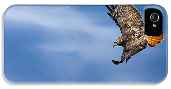 Redtail iPhone 5 Cases - Red Tailed Hawk Soaring iPhone 5 Case by Bill  Wakeley