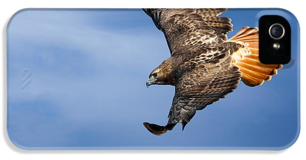 Redtail iPhone 5 Cases - Red-Tailed Hawk Soaring Square iPhone 5 Case by Bill  Wakeley