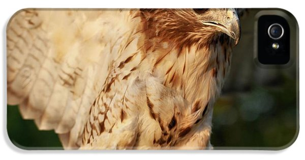Hawk iPhone 5 Cases - Red Tailed Hawk Wingspan iPhone 5 Case by Dan Sproul