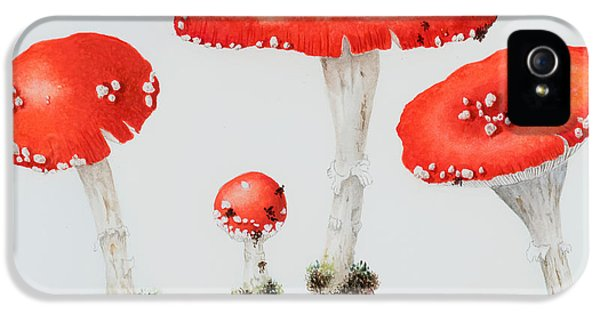 Stools iPhone 5 Cases - Red Toadstools Fly Agaric  iPhone 5 Case by Sally Crosthwaite