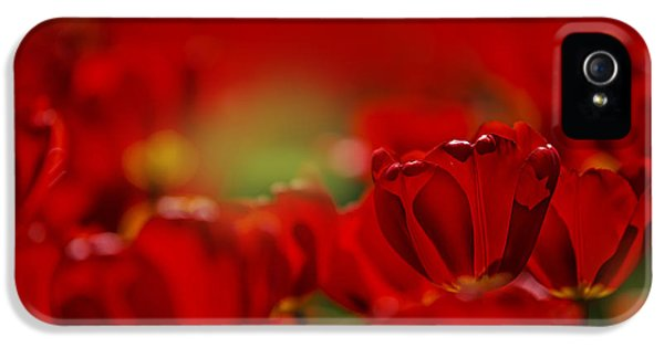 Tulips iPhone 5 Cases - Red Tulips iPhone 5 Case by Nailia Schwarz