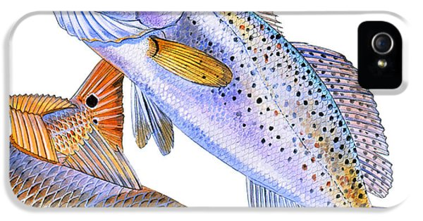 Redfish Trout IPhone 5 / 5s Case by Carey Chen