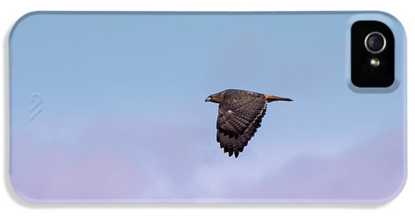 Redtail iPhone 5 Cases - Redtail Hawk Fly By iPhone 5 Case by Ernie Echols