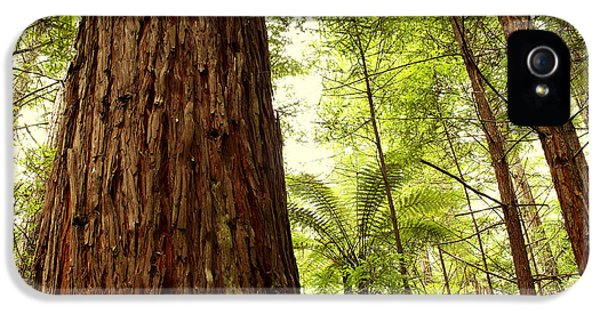 Daytime iPhone 5 Cases - Redwood forest iPhone 5 Case by Les Cunliffe