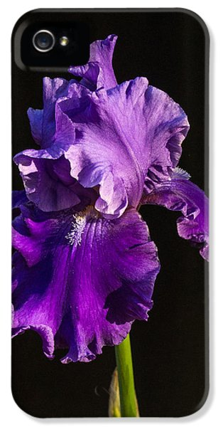 Chlorophyll iPhone 5 Cases - Regal Purple Iris iPhone 5 Case by Douglas Barnett
