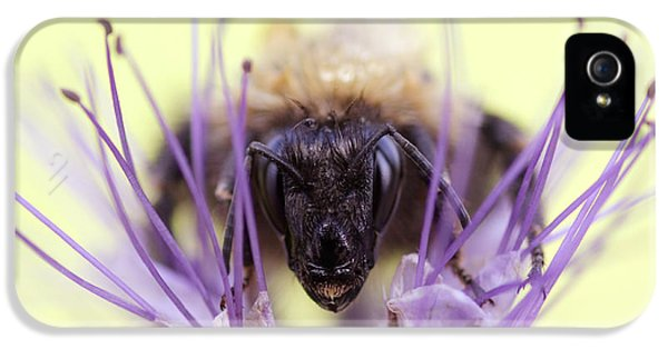 Bee iPhone 5 Cases - Resitance is Futile iPhone 5 Case by Roeselien Raimond