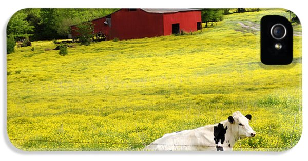 Meadow iPhone 5 Cases - Resting Place iPhone 5 Case by Amy Tyler