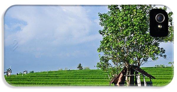 Shanty iPhone 5 Cases - Rice Fields iPhone 5 Case by Nila Newsom