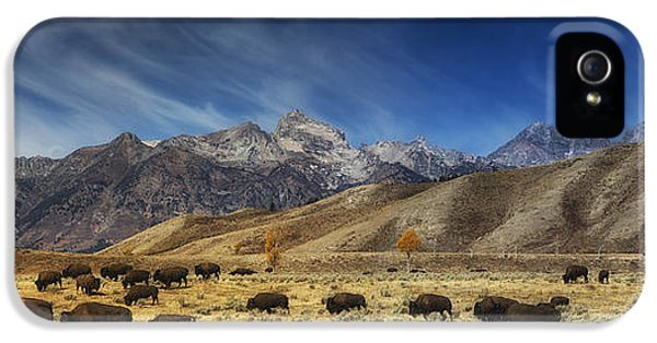 Roaming iPhone 5 Cases - Roaming Bison iPhone 5 Case by Mark Kiver