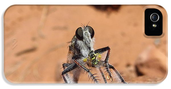 Casey iPhone 5 Cases - Robber Fly iPhone 5 Case by Casey Hodnett