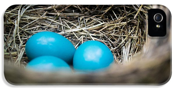 Blue Bird iPhone 5 Cases - Robins Eggs iPhone 5 Case by Shelby  Young