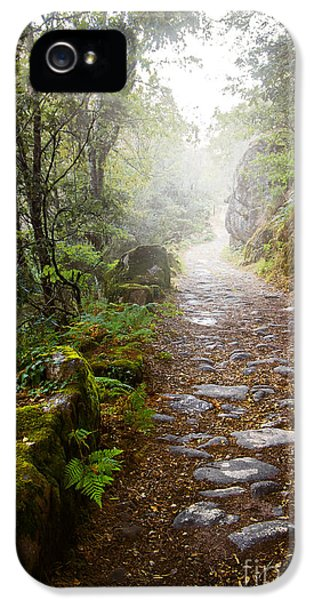 Raining iPhone 5 Cases - Rocky trail in the foggy forest iPhone 5 Case by Carlos Caetano