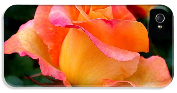 Pink iPhone 5 Cases - Rose Beauty iPhone 5 Case by Rona Black