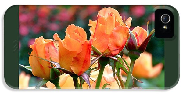 Rose Bunch IPhone 5 / 5s Case by Rona Black
