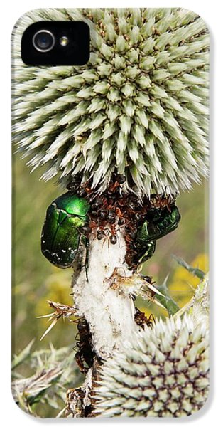 Rose Chafers And Ants On Thistle Flowers IPhone 5 / 5s Case by Bob Gibbons
