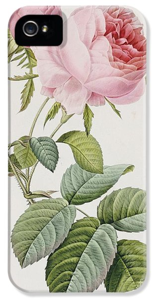 Blooming iPhone 5 Cases - Rose iPhone 5 Case by Pierre Joesph Redoute