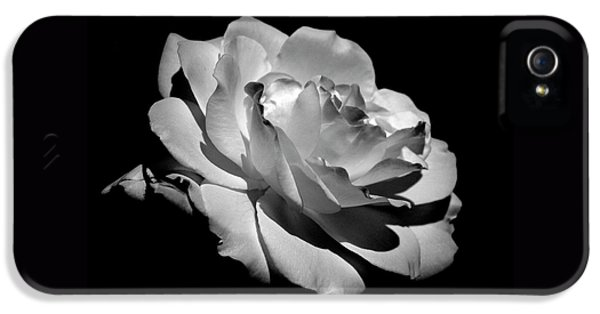 White Flowers iPhone 5 Cases - Rose iPhone 5 Case by Rona Black