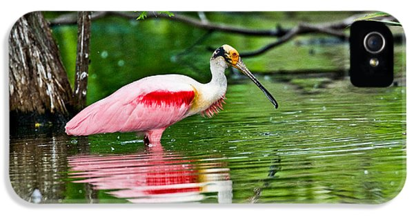 Roseate Spoonbill Wading IPhone 5 / 5s Case by Anthony Mercieca