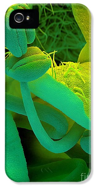 Scanning Electron Microscope iPhone 5 Cases - Rosemary SEM iPhone 5 Case by Spl