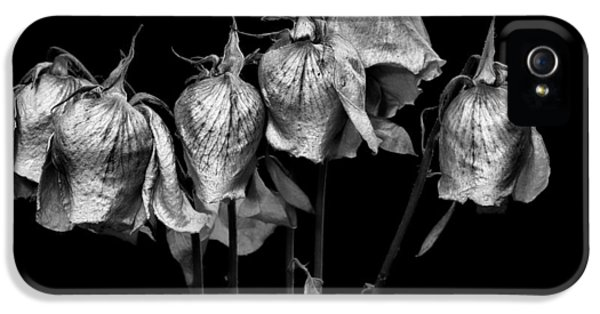 Christopher Holmes Photography iPhone 5 Cases - Roses of Memories Past - BW iPhone 5 Case by Christopher Holmes