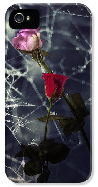 Spider iPhone 5 Cases - Roses With Coweb iPhone 5 Case by Joana Kruse