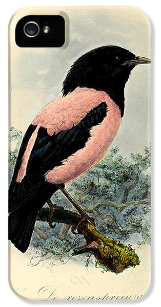 Rosy Starling IPhone 5 / 5s Case by J G Keulemans