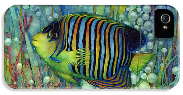 Underwater iPhone 5 Cases - Royal Angelfish iPhone 5 Case by Hailey E Herrera