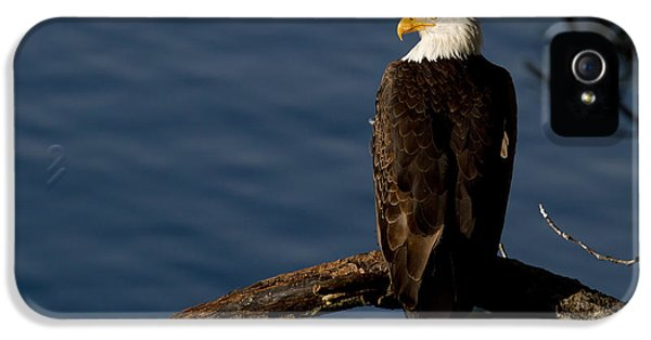 Eagle iPhone 5 Cases - Royalty iPhone 5 Case by Reflective Moment Photography And Digital Art Images