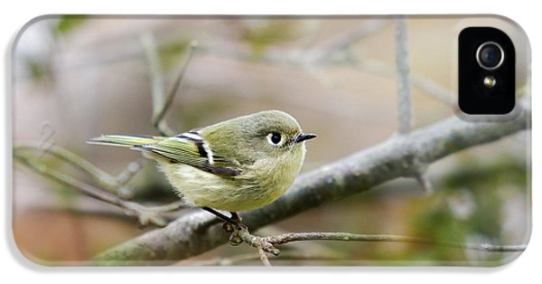 Bird Watcher iPhone 5 Cases - Ruby-Crowned Kinglet iPhone 5 Case by Christina Rollo