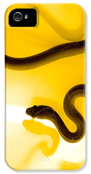 S IPhone 5 / 5s Case by Holly Kempe