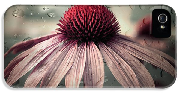 Echinacea iPhone 5 Cases - Sad Solitude iPhone 5 Case by Aimelle