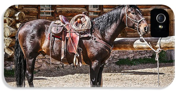Patiently iPhone 5 Cases - Saddled and Waiting iPhone 5 Case by Sue Smith