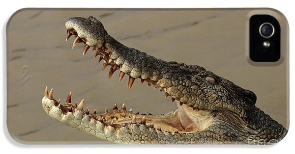 Salt Water Crocodile 1 IPhone 5 / 5s Case by Bob Christopher
