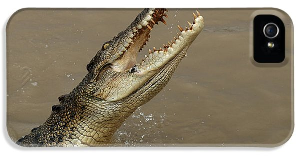 Salt Water Crocodile Australia IPhone 5 / 5s Case by Bob Christopher