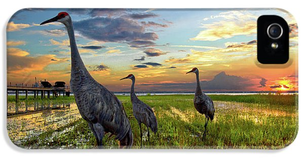 Sandhill Sunset IPhone 5 / 5s Case by Debra and Dave Vanderlaan