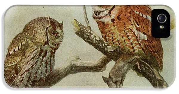 Screech Owls IPhone 5 / 5s Case by Louis Agassiz Fuertes