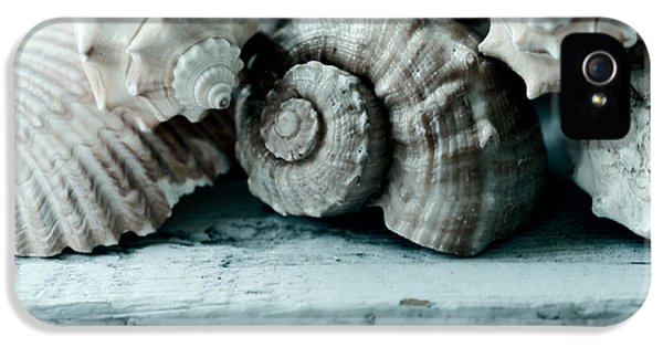 Shells iPhone 5 Cases - Sea Gifts iPhone 5 Case by Bonnie Bruno