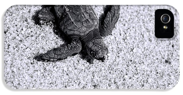 Sea Turtle In Black And White IPhone 5 / 5s Case by Sebastian Musial
