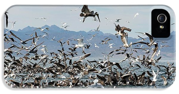 Seabirds Feeding IPhone 5 / 5s Case by Christopher Swann