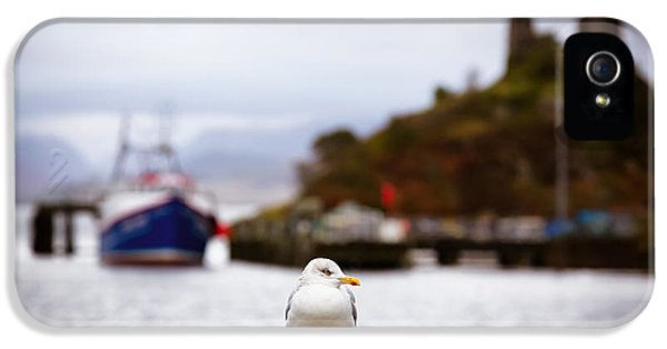 Harbour iPhone 5 Cases - Seagull at Moil Castle iPhone 5 Case by Jane Rix
