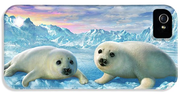 Tenderness iPhone 5 Cases - Seal Pups iPhone 5 Case by Adrian Chesterman