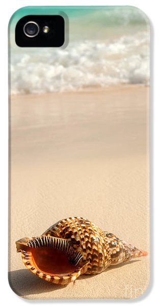 Ashore iPhone 5 Cases - Seashell and ocean wave iPhone 5 Case by Elena Elisseeva