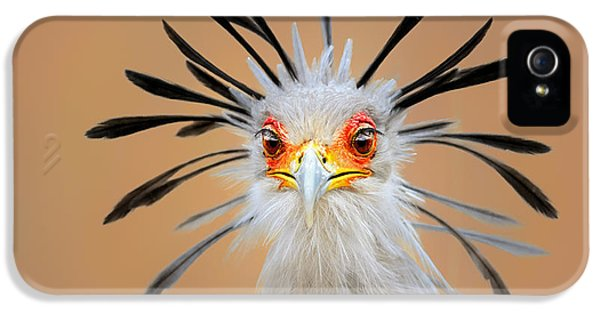 Beak iPhone 5 Cases - Secretary bird portrait close-up head shot iPhone 5 Case by Johan Swanepoel