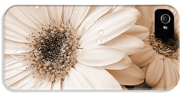 Waterdrop iPhone 5 Cases - Sepia Gerber Daisy Flowers iPhone 5 Case by Jennie Marie Schell