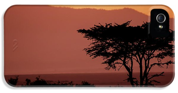 Tree iPhone 5 Cases - Serengeti Sunset iPhone 5 Case by Sebastian Musial