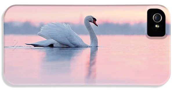 Proud iPhone 5 Cases - Serenity   Mute Swan at Sunset iPhone 5 Case by Roeselien Raimond