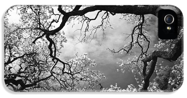 Black And White iPhone 5 Cases - Sheltering Sky iPhone 5 Case by Laurie Search