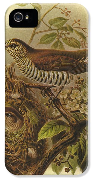 Shining Cuckoo IPhone 5 / 5s Case by J G Keulemans