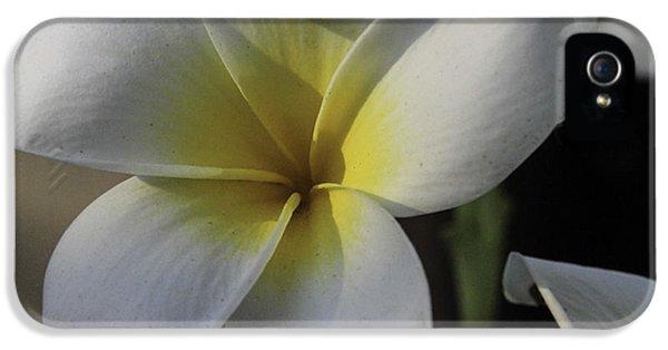Yellow And White Plumeria Flower Frangipani iPhone 5 Cases - Single Plumeria iPhone 5 Case by Bonnie Davidson